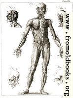 Plate XV.—Anatomy.