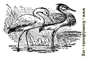 The Stork and the Heron