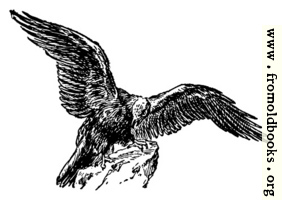 The eagle, from the book of Deuteronomy ch. 32 v. 11