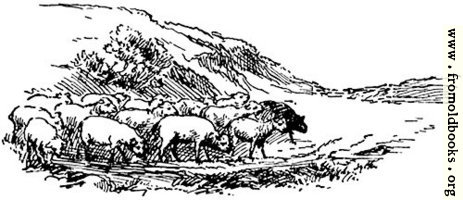 Sheep, from p. 69