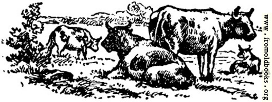 Oxen, from p. 69