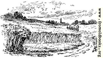 The field, from p. 69