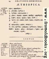 14: Æthiopica