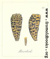 62. Burdock seeds
