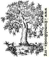 322.—Apple Tree. Pyrus Malus. C. S.