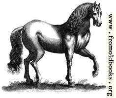 135b.—Antique engraving of a horse