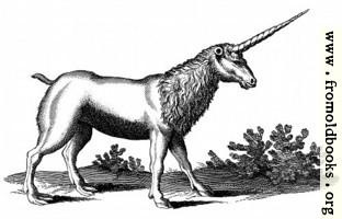 Unicorn with Mane (Monoceros seu Unicornu Jubatus)