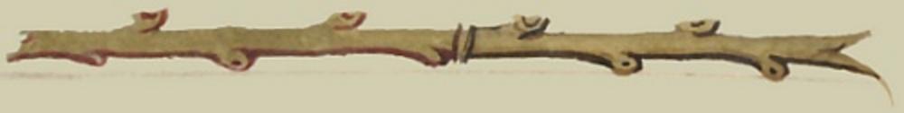 Twig line filler