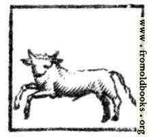 Taurus (the Bull)