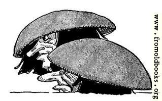 Gnomes hide under toadstools