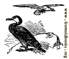 The Gier Eagle and the Cormorant