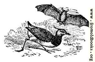 The Lawing and the Bat