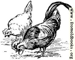Fowl of the air, from p. 69