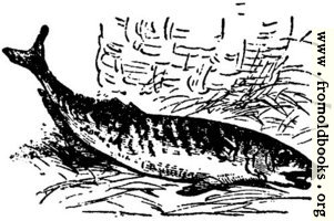 Fish of the sea, from p. 69
