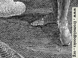Engraving detail: stripy feet