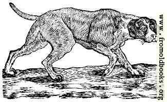 890.– Dog.
