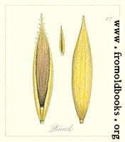 79. Quack Seeds