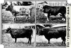 British Breeds of Cattle I (2/3)