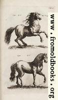 Tab. I.: Horses