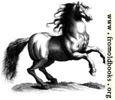 135a.—Antique engraving of a horse