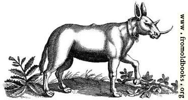 Monoceros (Unicorn) Engraving