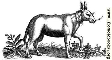 Monoceros (Unicorn) Engraving