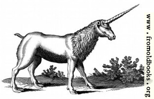 Unicorn with Mane (Monoceros seu Unicornu Jubatus)