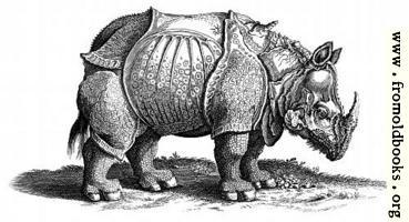 Rhinocerous (Hornnase Rhinocer) Engraving