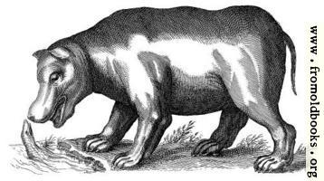 Another antique brass engraving of a Hippopotamus