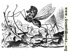 Rocking-Horse Fly