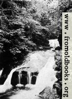 Woodland Water