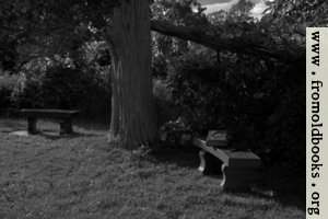 Two benches under an old tree with a Bible (black and white)