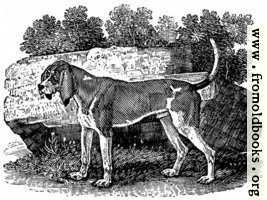 The Old English Hound