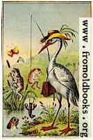 Bird fishing