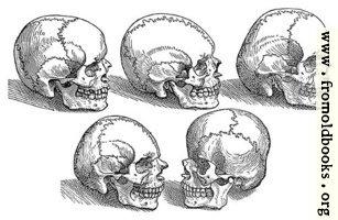 18. Five Skulls